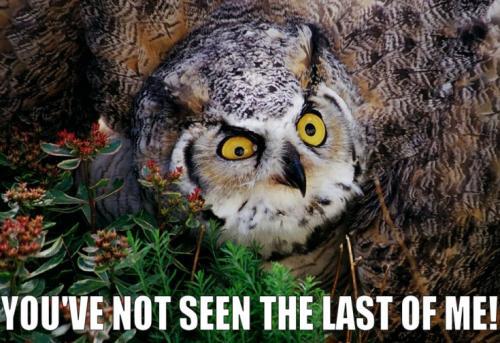 owl-youve-seen-last.jpg