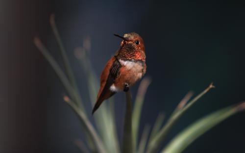 bird-wallpaper.jpg