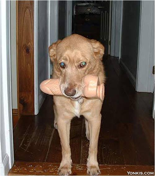 doggy-vibrator.jpg