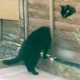 snakecat.jpg