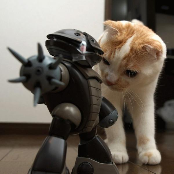 cat-vs-mech.jpg