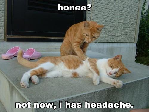 honee-not-now-i-has-headache.jpg