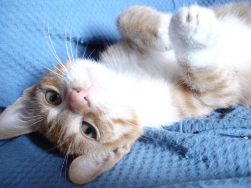 upsidedown-cat.jpg