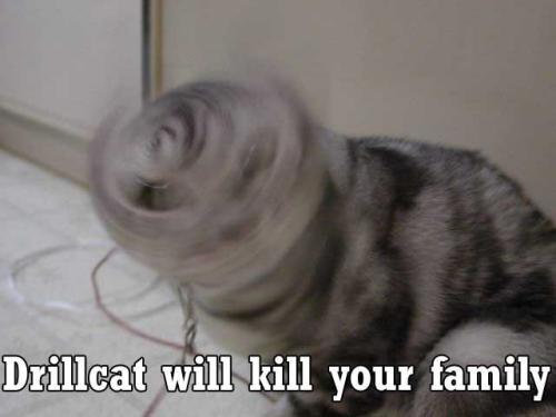 Drillcat will kill ur family