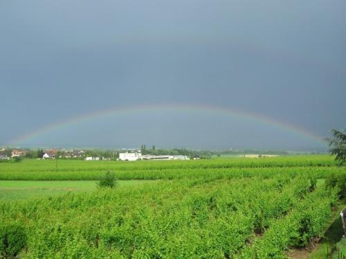 full-rainbow.jpg