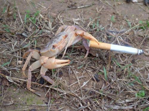 smoking-crab.jpg