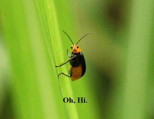 cute-bug