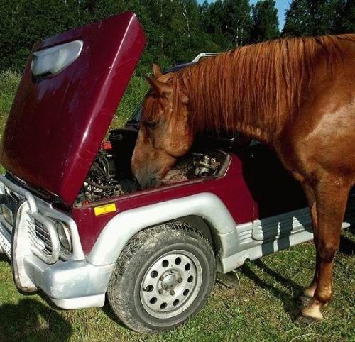 horse-mechanic