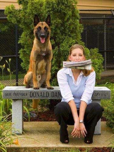 smart-dogs
