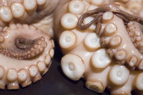 octopus-limbs.jpg