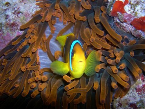 clown-fish.jpg