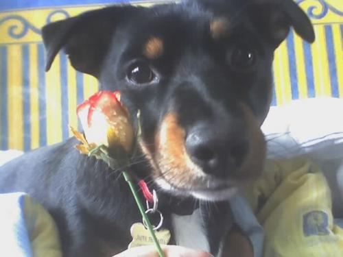 flower-dog.jpg