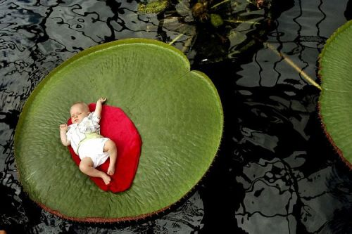 baby on lilly pad