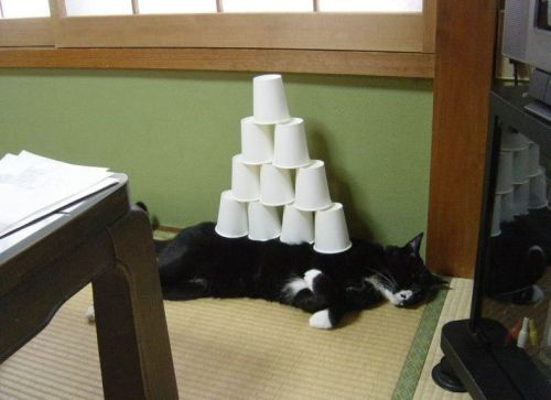 cup stack on cat