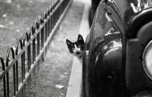 Shocked Wheel Well Kitty