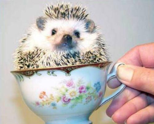 Hedgehog Tea Cup