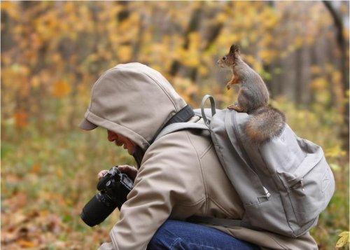 Squirrel Commander