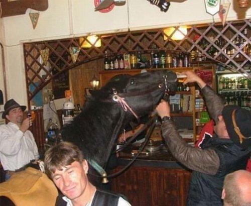 bar horse drinks beer