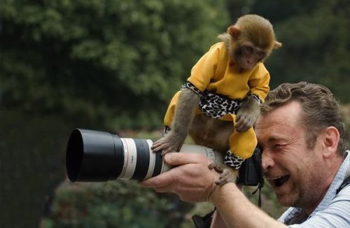 Monkey sits on camera
