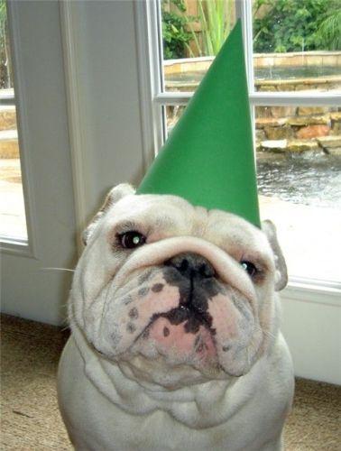 dunce dog