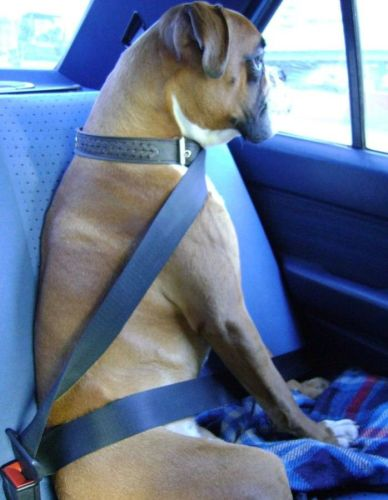 strap in you doggy