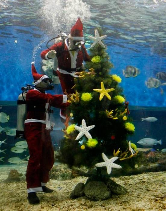 underwater xmas tree