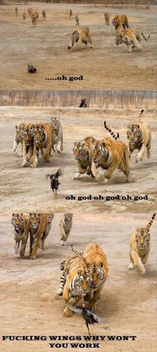 tigers vs bird