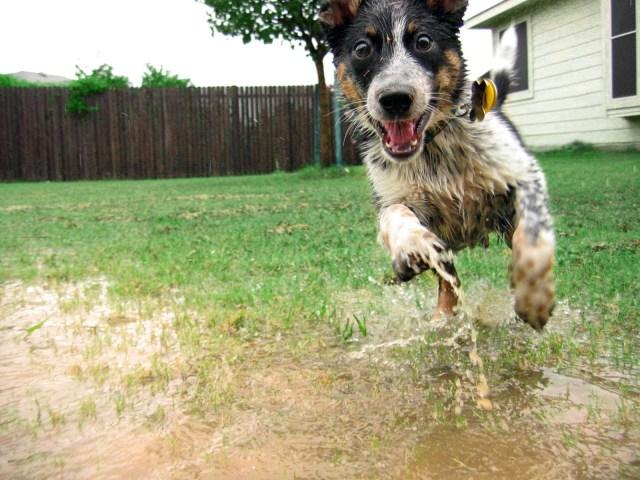 wet happy dog
