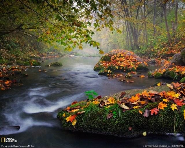 river leaves