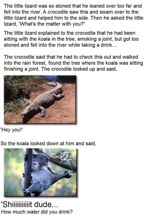 stoned little lizard