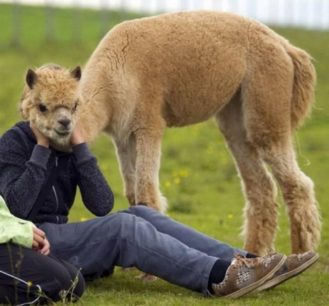 camelhug