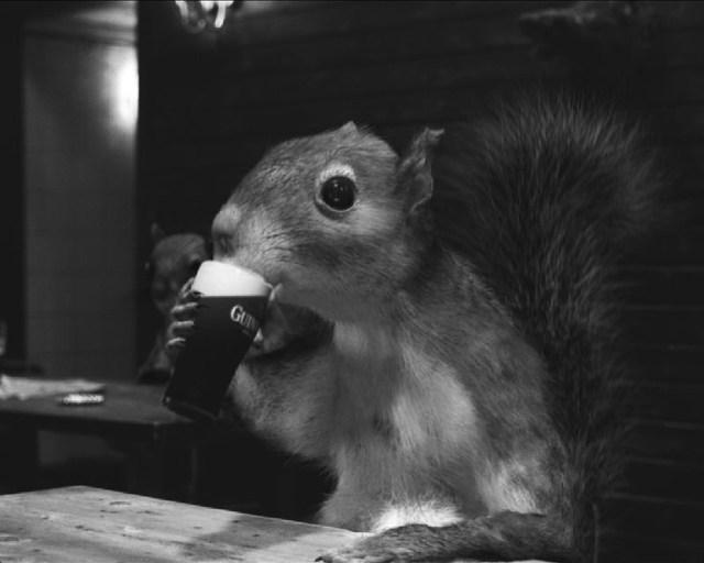 Guiness Squirrel