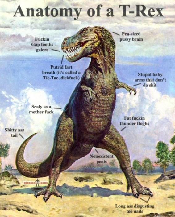anatomy of a t-rex