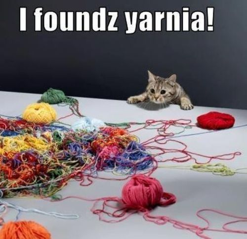 I foundz yarnia