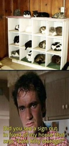 cute kitty storage