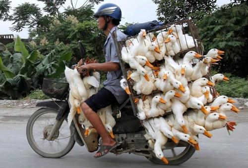 duck bike