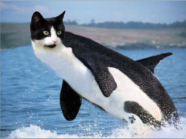 cat whale.jpg