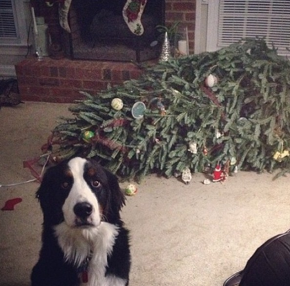 xmas tree vs dog