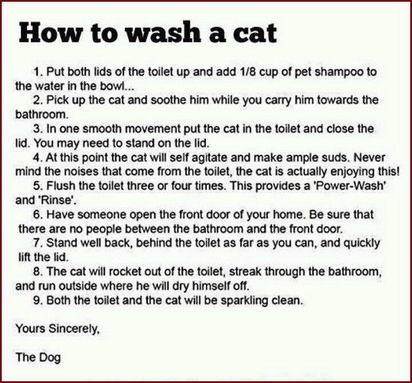 how to wash a cat.jpg