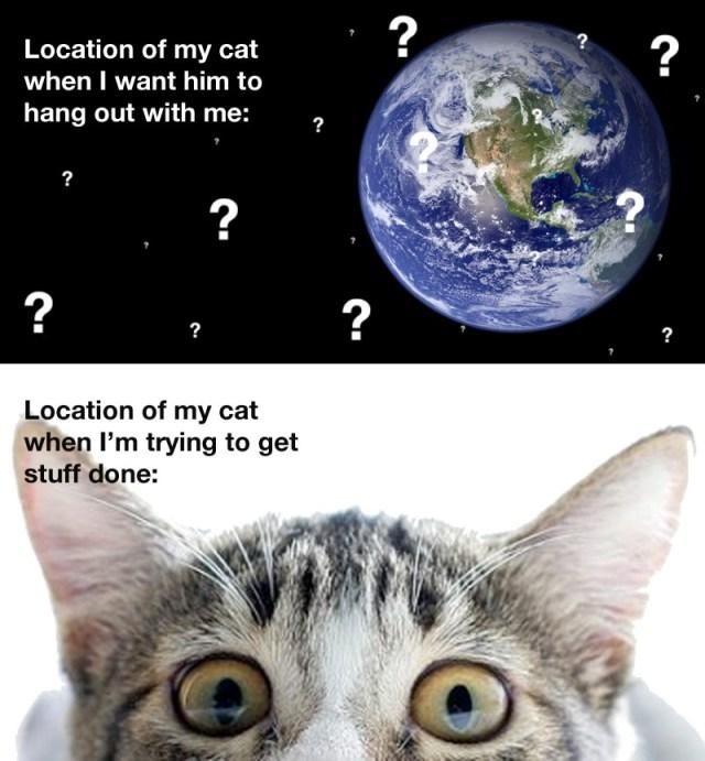 location of my cat.jpg