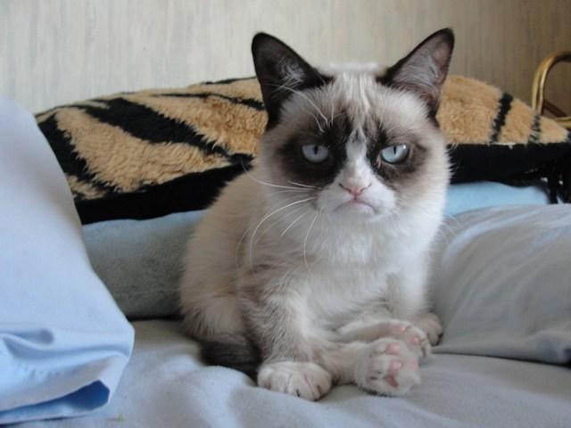 unhappy cat.jpg