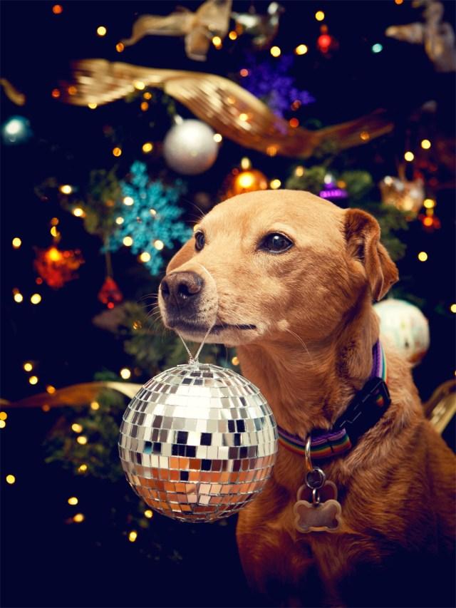 disco christmas dog.jpg