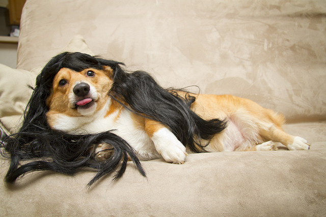 sexy cosplaying dog.jpg
