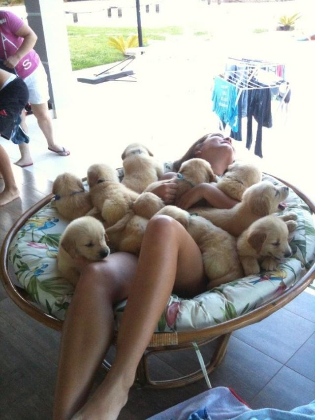 puppy pile.jpg