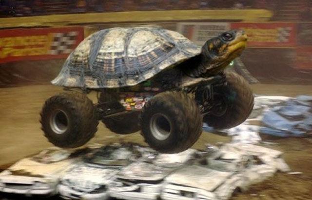 turtle truck .jpg