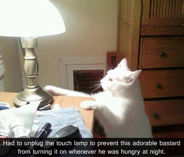cats vs touch lamps.jpg