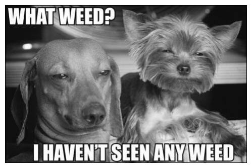 what weed.jpg