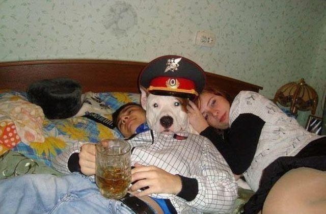 Military Dog.jpg