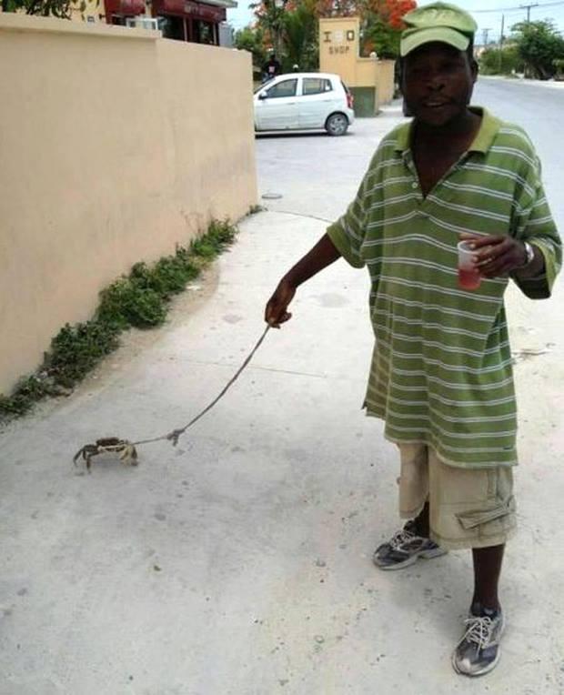 crab walker.jpg