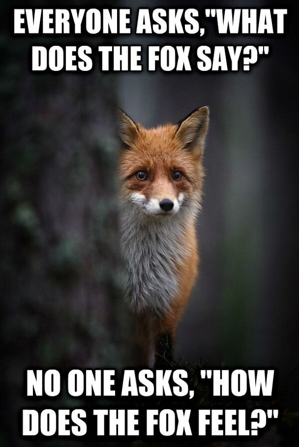 everyone asks what does the fox say.jpg